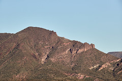 Jan 23 - 36 of 112 (Verde River) Tags: hotairballoons landscape landscapes bird birds phainopepla woodpecker thrush cactuswren cactus kieslingfalcon gambelsquail deer muledeer nature
