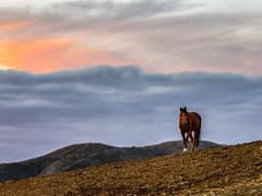 Agoura Hills Ca. (Eric Zumstein) Tags: maliburiders agourahills california unitedstatesofamerica