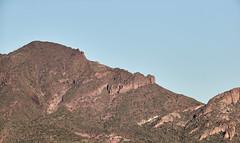 Jan 23 - 52 of 112 (Verde River) Tags: hotairballoons landscape landscapes bird birds phainopepla woodpecker thrush cactuswren cactus kieslingfalcon gambelsquail deer muledeer nature