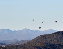 Jan 23 - 44 of 112 (Verde River) Tags: hotairballoons landscape landscapes bird birds phainopepla woodpecker thrush cactuswren cactus kieslingfalcon gambelsquail deer muledeer nature