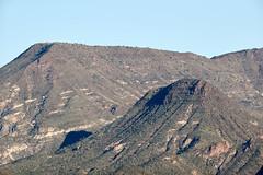 Jan 23 - 37 of 112 (Verde River) Tags: hotairballoons landscape landscapes bird birds phainopepla woodpecker thrush cactuswren cactus kieslingfalcon gambelsquail deer muledeer nature
