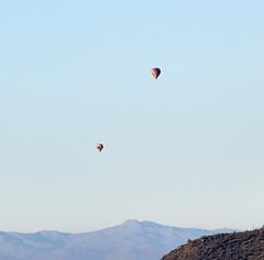 Jan 23 - 31 of 112 (Verde River) Tags: hotairballoons landscape landscapes bird birds phainopepla woodpecker thrush cactuswren cactus kieslingfalcon gambelsquail deer muledeer nature