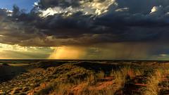 Regen in der Kalahari (petraherdlitschke) Tags: africa southafrica kgalagadi landscape nature naturephotography outofafrica rain sunset canon5dmark4 canon2470mm