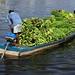 Banana Boat - Brazil 2004