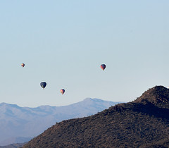 Jan 23 - 50 of 112 1 (Verde River) Tags: hotairballoons landscape landscapes bird birds phainopepla woodpecker thrush cactuswren cactus kieslingfalcon gambelsquail deer muledeer nature