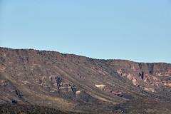 Jan 23 - 38 of 112 (Verde River) Tags: hotairballoons landscape landscapes bird birds phainopepla woodpecker thrush cactuswren cactus kieslingfalcon gambelsquail deer muledeer nature