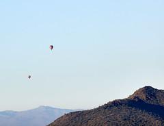 Jan 23 - 30 of 112 (Verde River) Tags: hotairballoons landscape landscapes bird birds phainopepla woodpecker thrush cactuswren cactus kieslingfalcon gambelsquail deer muledeer nature