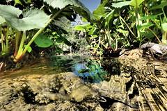 Croatia (lamboleykalou) Tags: croatia yougoslavia reflexion water aquatic poetry eden nature