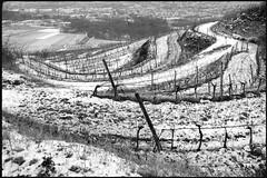 Zöbing (Harald Reichmann) Tags: zöbing heiligenstein landschaft winter weinbau schnee weinstock weingarten