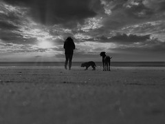 On the beach (ste_p0270) Tags: photoshop lightroom luminar4 bw blackandwhite sand clouds dogs sea sun beach