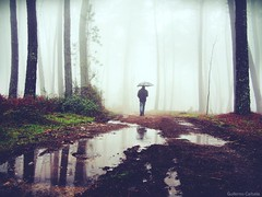 Versión color (Guillermo Carballa) Tags: umbrella pines people paths puddles mist morning man fog forest ferns woods water rain carballa colors olympus trees em5 light shadows