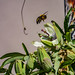 Bumble Bee 09