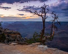 Grand Canyon National Park   |   Dusk at Mather Point (JB_1984) Tags: tree rim canyon geologicalformation cloud blue red rock nationalpark nps matherpoint southrim grandcanyonnationalpark grandcanyon arizona az usa unitedstates nikon d500 nikond500