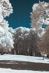 Infrared prak (Mads S. Hansen) Tags: nikon d7100 infra infrared red tree trees park