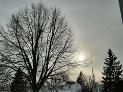 Shades of grey...... (angelinas) Tags: sky grey greysky sunlight trees silhouette outdoors montrealquebec canada moody earth ciel gris arbres winter