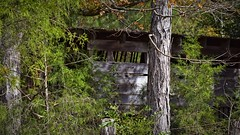 Barn in the woods (loufsmith) Tags: 2019 barn cabin cabininthewoods fall fences hiking loufsmith montevallo montevalloal montevalloalabama montevalloparksandrec nikon shelby shelbyal thisisalabama naturallight on1