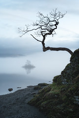 hanging tree (akh1981) Tags: amateurphotography beautiful benro cumbria clouds countryside calm derwentwater reflections fells fog rocks travel trees tranquil nikon nature nisifilters nisi nationalpark nationalheritage nationaltrust nationalheritagesite moody morning mist walking water winter landscape lakedistrict lake keswick outdoors