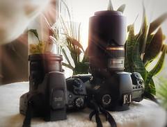 Die neuen Haustiere (eagle1effi) Tags: mygear canon powershot sx70 hs ds eos7d 7d dslr storyabout cdcard