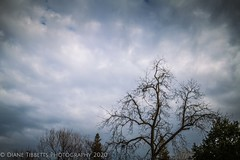 Moody afternoon (Diane Meade-Tibbetts) Tags: 365project 365project2020 january afternoon baretrees clouds landcsape mood moody moodysky nature project365 sky storm trees winter
