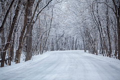 white canopy (jimmy_racoon) Tags: 70200 f4l is canon 5d mk2 fort snelling state park 2020 canopy minnesota nature roadway winter woods 70200f4lis canon5dmk2 fortsnellingstatepark