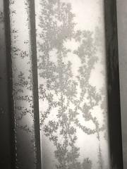 Frost on the Wall (sjrankin) Tags: 24january2020 edited weather ice kitahiroshima hokkaido japan closeup frost patterns garage