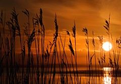 Sunset through the reeds (Ade Ward Phototherapy.) Tags: sunset sea sun seascape wales reeds landscape golden coast scenery exploring tranquility explore newport naturereserve zen coastline mindfulness channel newportwetlands eastusk light