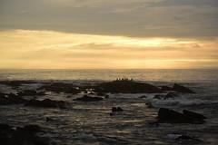 Pelicanos en el atardecer (Litrosss) Tags: ave playa atardecer