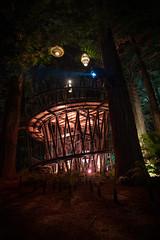 Close Encounters . . . (Lyndon (NZ)) Tags: 2020 rotorua newzealand nature nz forest night light lamp bush tourism attraction tree
