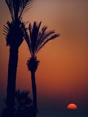 sundown in jaffa (ruthies work) Tags: telaviv jaffa middleeast ha'apoalimpark palmtrees sunset jafo israel mediterranean