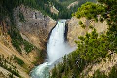 Lower Yellowstone Falls (Curtis Lannom) Tags: nationalpark yellowstone nps teton nature