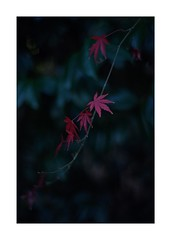 This work is 5/21 works taken on 2019/12/28 (shin ikegami) Tags: sony ilce7m2 a7ii sonycamera 50mm lomography lomoartlens newjupiter3 tokyo 単焦点 iso800 ndfilter light shadow 自然 nature naturephotography 玉ボケ bokeh depthoffield art artphotography japan earth asia portrait portraitphotography