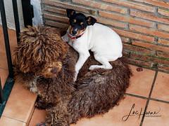 P1240608_Final (Luc Horne Photography) Tags: cuteness doggies guadalmar malaga spain andalusia