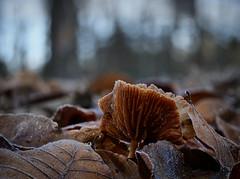 Wunder der Natur (Jens Schröter) Tags: deutschland de natur landschaft lumix nahaufnahme mushroom macro makro fungi farbig wald pilz pilze panasonic pflanze