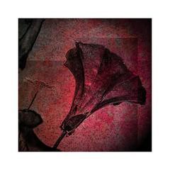 Flowers (b_kohnert) Tags: digitalart digitalpainting painting colors art nature plant flowers macro