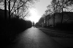 Berlin, HSH (tom-schulz) Tags: ricoh grii monochrom bw sw berlin thomasschulz weg bäume häuserblock personen hund rawtherapee gimp gegenlicht wintersonne