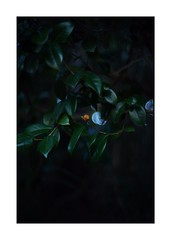 This work is 8/21 works taken on 2019/12/28 (shin ikegami) Tags: sony ilce7m2 a7ii sonycamera 50mm lomography lomoartlens newjupiter3 tokyo 単焦点 iso800 ndfilter light shadow 自然 nature naturephotography 玉ボケ bokeh depthoffield art artphotography japan earth asia portrait portraitphotography