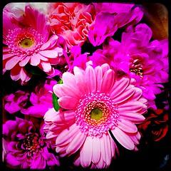 A Bright Bouquet (Julie (thanks for 9 million views)) Tags: 100flowers2020 bouquet pink hipstamaticapp iphone6s aldi supermarket new ross newross ireland irish indoor squareformat