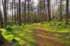 Polney Woods Path
