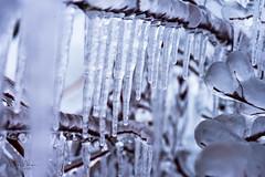 D20_0831 (markmorgen) Tags: artistspoint coastguardstation harbor ice