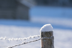 The Sun Will Wake You (brookis-photography) Tags: winter fence snow barbedwire frost