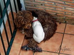 P1240602_Final (Luc Horne Photography) Tags: cuteness doggies guadalmar malaga spain andalusia