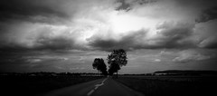 The Country II (mgneb) Tags: bw black white mono monochrome noir blanc blanco bianco nero negro marne champagne ardenne est noiretblanc nb campagne champ country france trees lines clouds sky contrast dark shadows grain texture road fields mood atmosphere