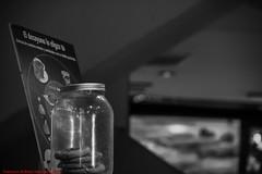 UNTITLED MAY 2012-Madrid (FRANCISCO DE BORJA SÁNCHEZ OSSORIO) Tags: españa exposure enfoque encuadre exposicion madrid moment blackandwhite blancoynegro bw love light luz life lovely flechazo focus focuspoint foco framing nature naturaleza nice bokeh beauty belleza color colour composition composición colourtemperature timeexposure tiempodeexposición temperaturadecolor amor arrow autumn otoño verano vida view instant instante invierno winter passion photo pasión primavera photostreet spring shot summer streetphoto street detalle detalles detail details desenfoque disparo divertido delicado delicate dof depthoffield