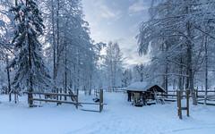 Au pays des Sames (S@ndrine Néel) Tags: samis lapland laponie europe finland nature same néelsandrine