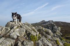 The Stiperstones (Keartona) Tags: shropshire stiperstones rocks rocky landscape spring sunshine walk scenery sunny outcrop moors england english poppy dog