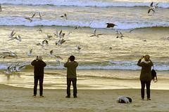 Birds at sunset (Poupetta) Tags: seagulls birds beach sea waves telaviv