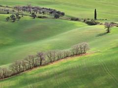Tapis de velours (Jolivillage) Tags: jolivillage paysage landscape paesaggio valdorcia toscane tuscany toscana italie italy italia europe europa picturesque geotagged printemps spring primavera
