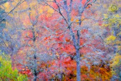 Fall (Jorne de Bruin) Tags: autumn cairngorms clouds color creative fall forest landscape mountains nationalpark scenic scotland sunrise trees doubleexposure