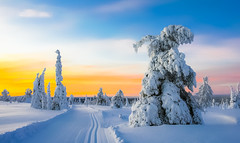 Lovely Lapland (ikkasj) Tags: pallasyllästunturinationalpark nature innature finland lapland muonio sammaltunturi colorful sunset blue crosscountryskiing skiiing evening snow winter