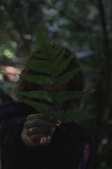 (fervent.png) Tags: nature fern man person macro canon vintage aesthetic portrait